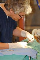 Veterinarian Operating